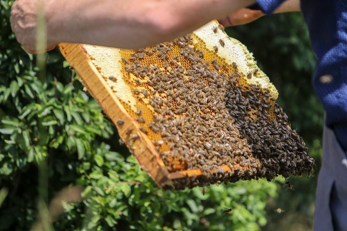 méhviasz gyertya